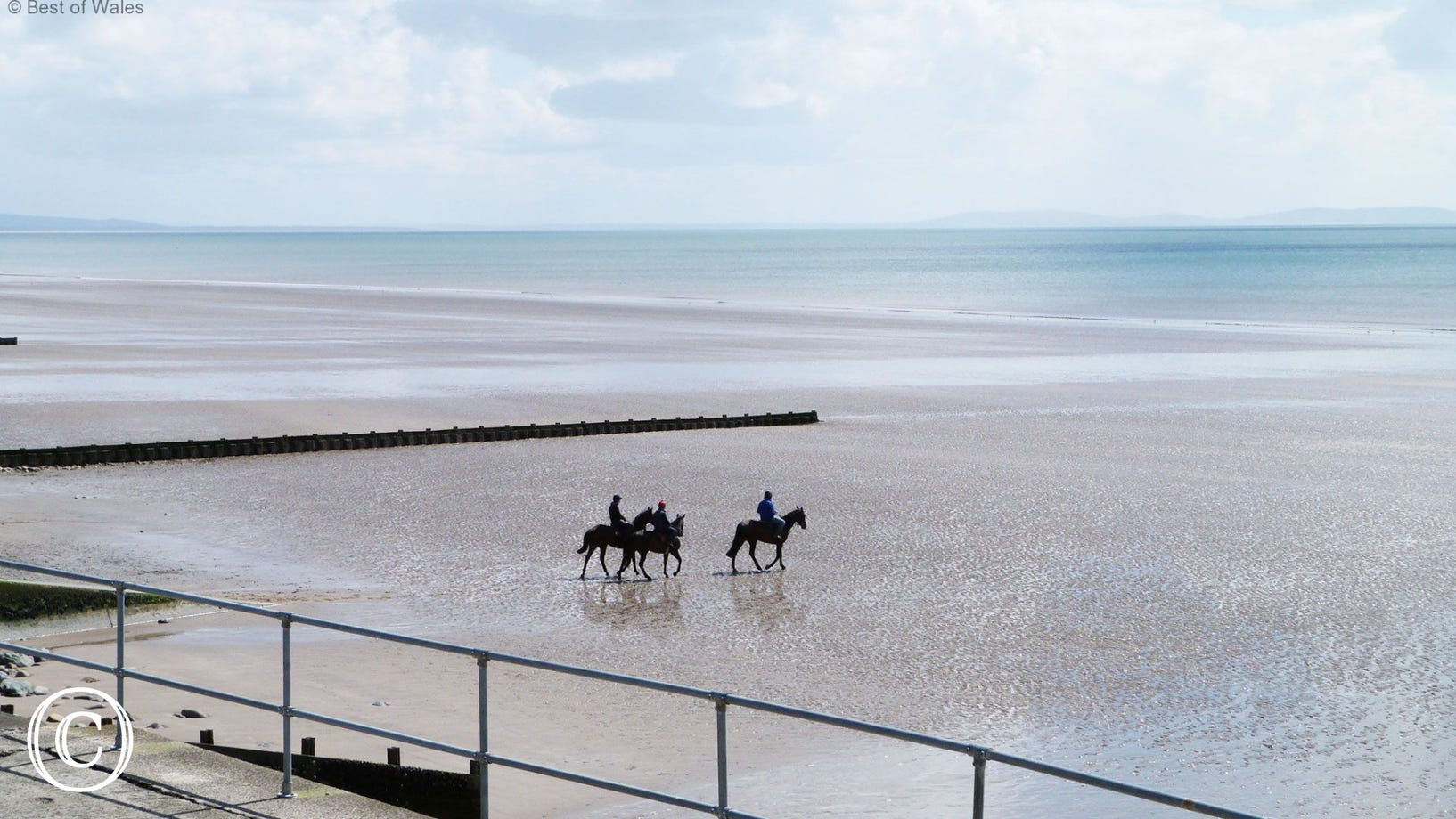 Horses walking across Amroth Beach