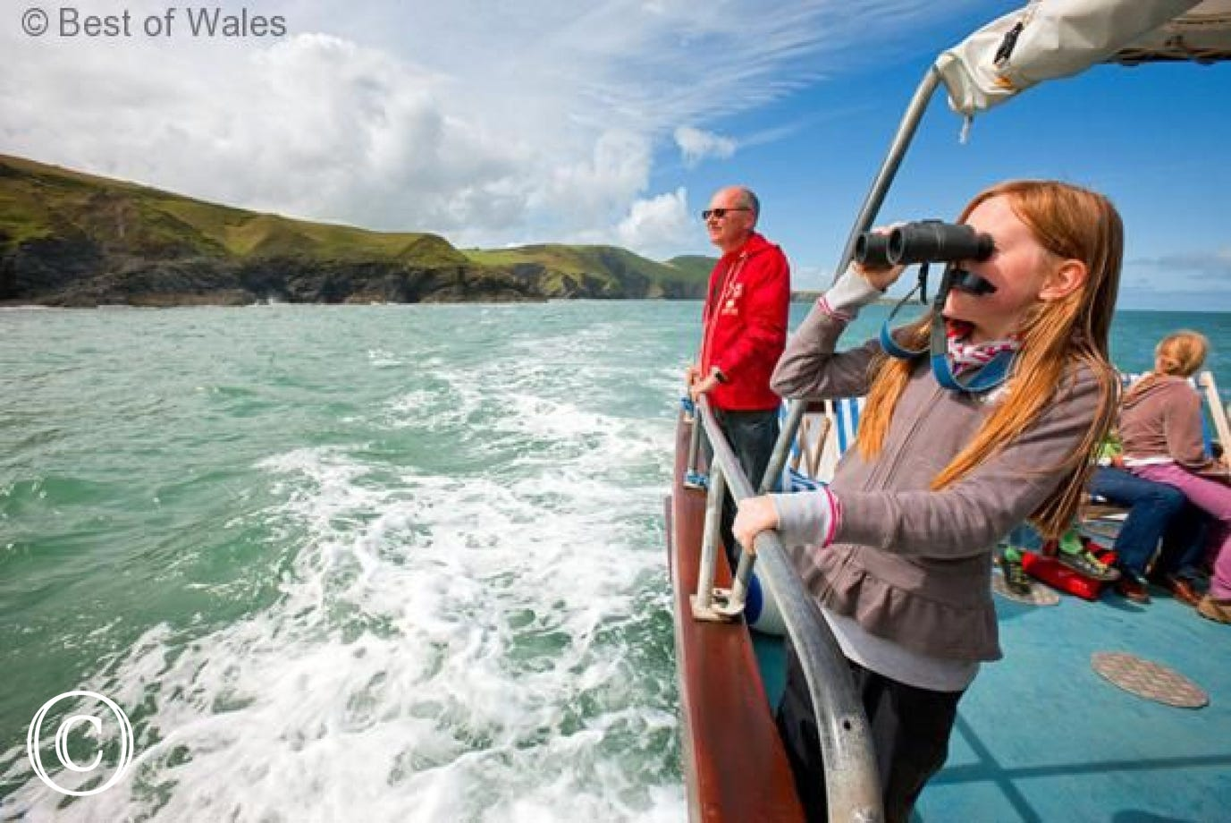 Ceredigion coast is famous for its dolphin watching trips