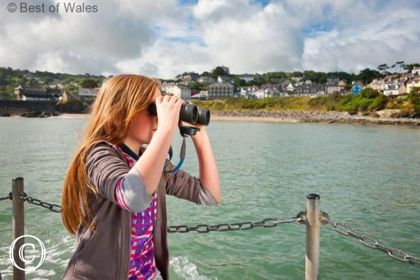 dolphin and whale watching from New Quay