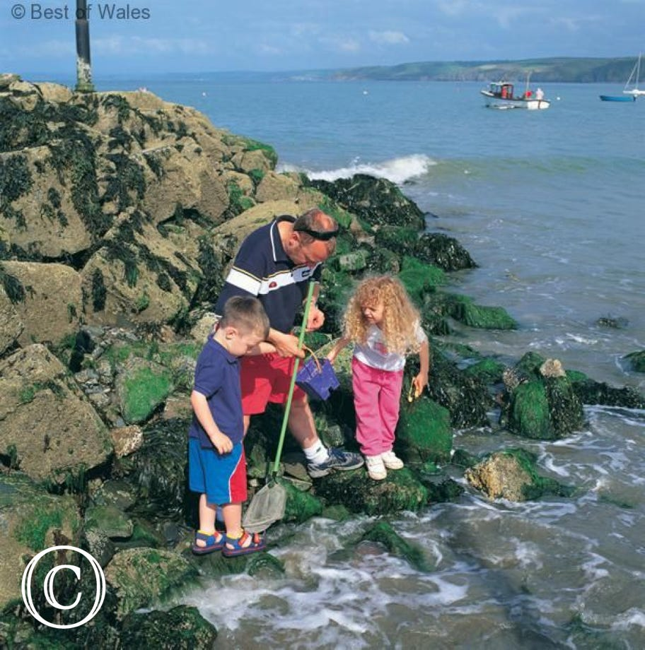 rockpooling in New Quay harbour