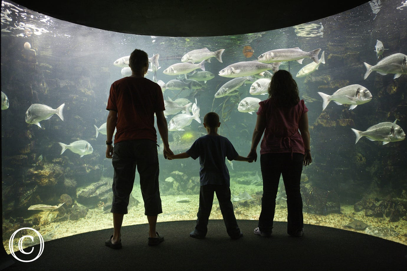 Anglesey Sea Zoo - another top attraction on the island